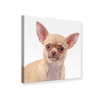 Leinwand drucken Chihuahua
