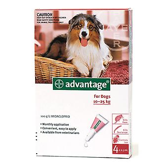 Advantage 250 (Red) Spot on For Large Dogs 10-25kg (22-55lbs), 4 Pack