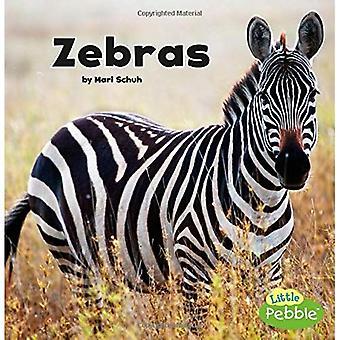 Zebror (svart och vitt djur)