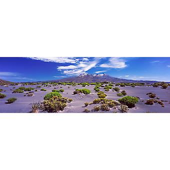 Volcanic landscape Rangipo Desert Tongariro National Park Ruapehu District North Island Volcanic Plateau North Island New Zealand Poster Print