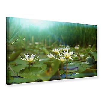 Canvas Print Waterlily Pond