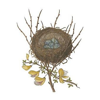 Antique Birds Nest II Poster Print by James Bolton (8 x 10)