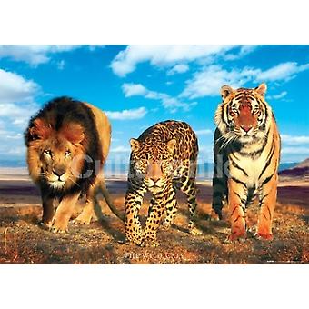 Wild Cats Poster Poster Print