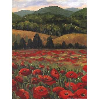 Blue Ridge Poppies Poster Print by Linda Pirkle (12 x 16)