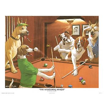 Scratching Beagle Poster Print by Arthur Sarnoff (20 x 16)