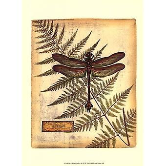 Royal Dragonflies III Poster Print (10 x 13)