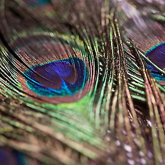 Peacock feathers 10 piece 80 cm long