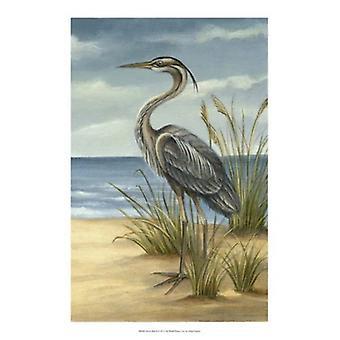 Shore fågel II affisch Skriv av Ethan Harper (13 x 19)