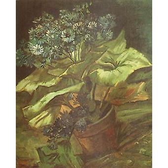 Cineraria in a Flowerpot, Vincent Van Gogh, 54.5 x46cm