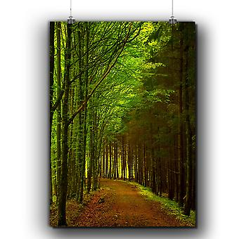 Matte or Glossy Poster with Forest Path Photo Nature | Wellcoda | *q253