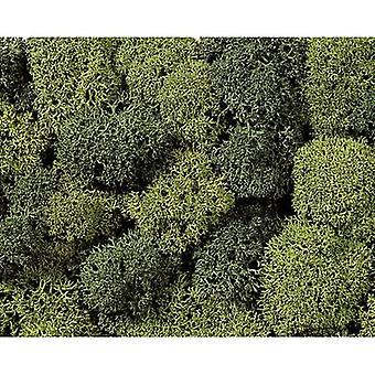 Moss NOCH 8621 Light green, Dark green