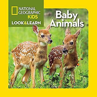 Tierbabys (National Geographic kleine Kids schauen & lernen)