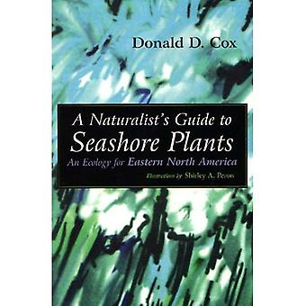 Naturalist's Guide to Seashore Plants: An Ecology for Eastern North America