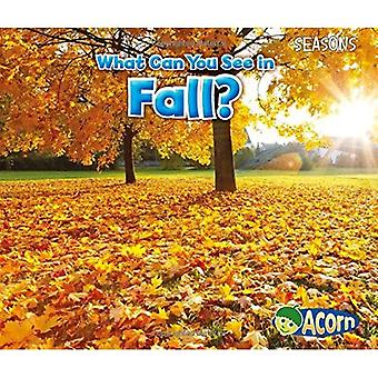 What Can You See in Fall? (Seasons (Heinemann))