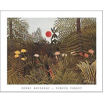 Virgin Forest-Sonne Poster Print von Henri Rousseau (28 x 22)