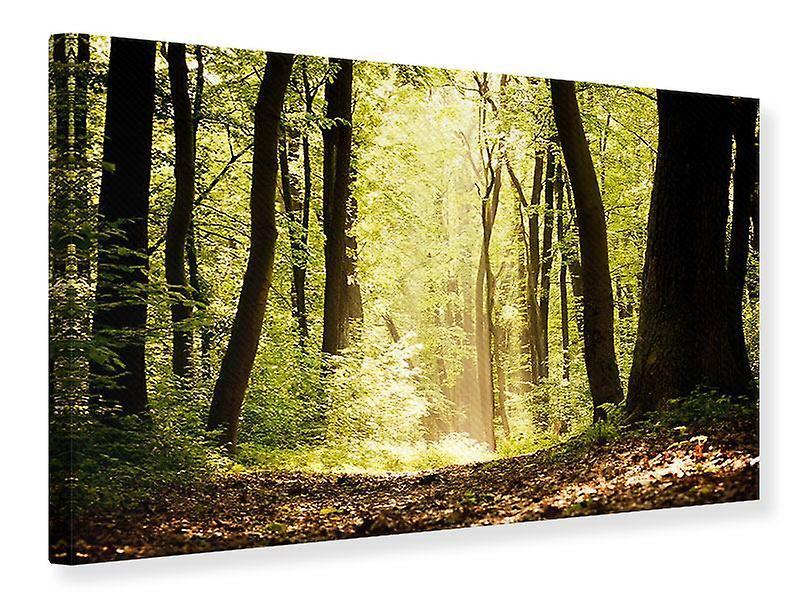 Toile impression Sunrise dans la forêt