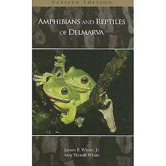 Delmarvan matelijat ja sammakkoeläimet