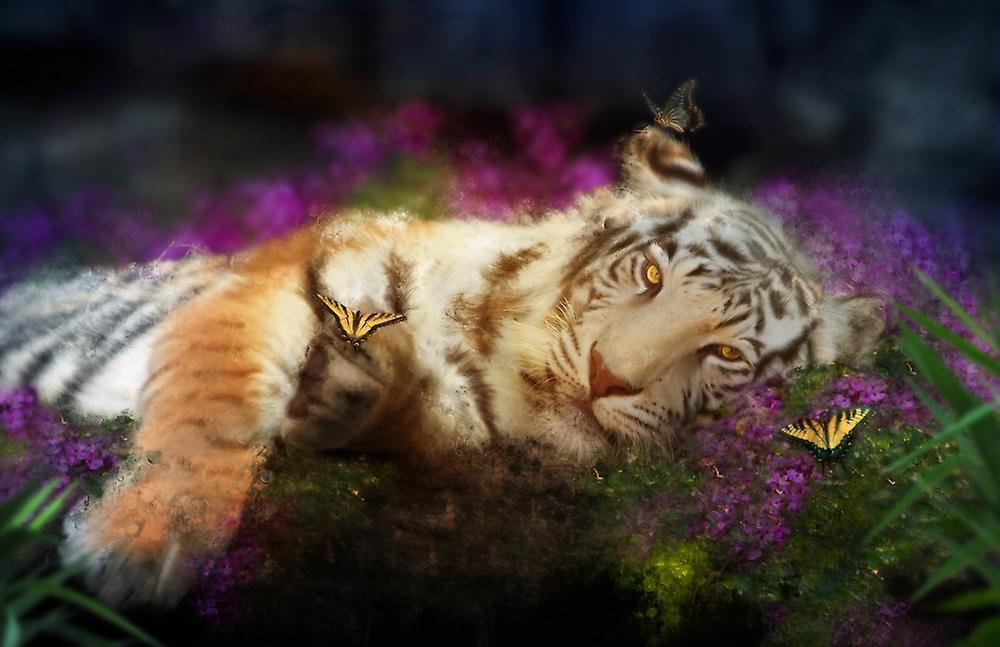 Фото открытки с тигром