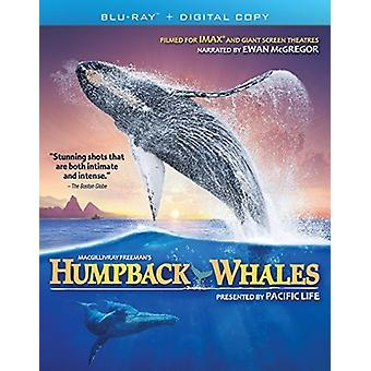 Humpback Whales [Blu-ray] USA import