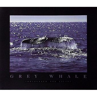 Whale Tale Poster trykk av Bob Talbot (28 x 24)