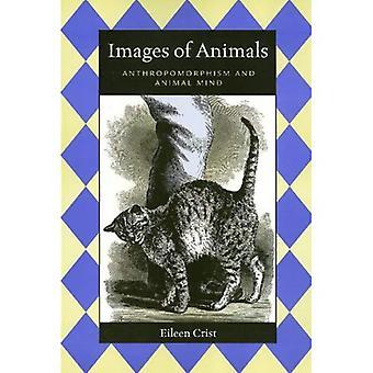 Bilder von Tieren
