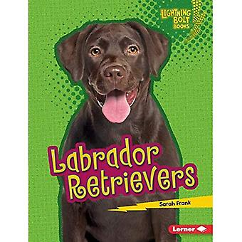 Labrador Retrievers (Lightning Bolt Books (Tm) -- Who's a Good Dog?)