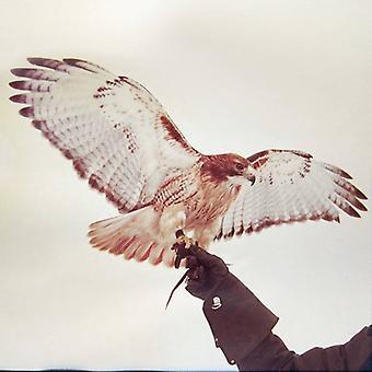 JM Airis - vilde fugle [Vinyl] USA import