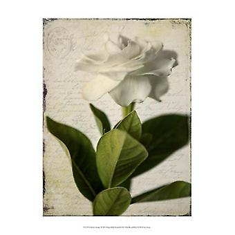Gardenia Grunge I Poster Print by Honey Malek (13 x 19)