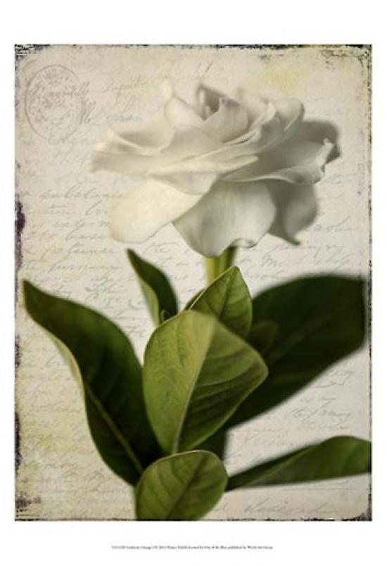 Gardenia Grunge I Poster Print by Honey Malek (13 x 19)