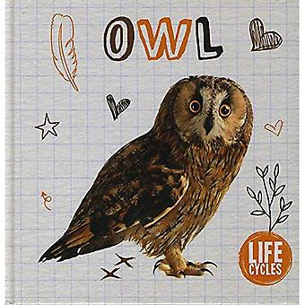 Owl (Life Cycles)