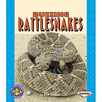 Surrande skal ler ormar