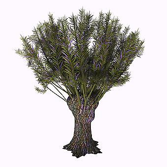 Salix viminalis shrub on white background Poster Print by Corey FordStocktrek Images