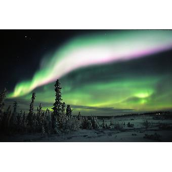 Multi Coloured Aurora Eagle Plains Yukon PosterPrint