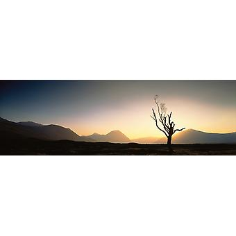 Tree Glencoe Highlands Scotland Poster Print