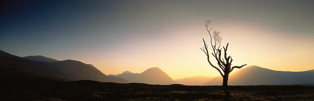 Tree Glencoe Highlands Scotland Poster Print