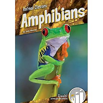 Amphibians (Animal Classes: Dash! Leveled Readers, Level 1)