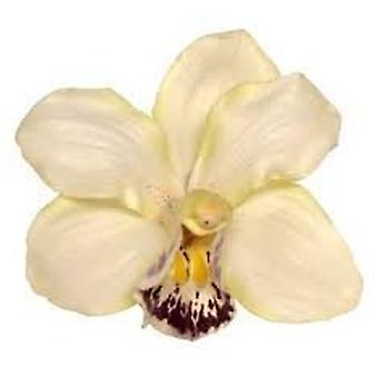 Boolavard® TM orkidé blomma hår klipp brudkläder Hawaii part flicka (grädde)