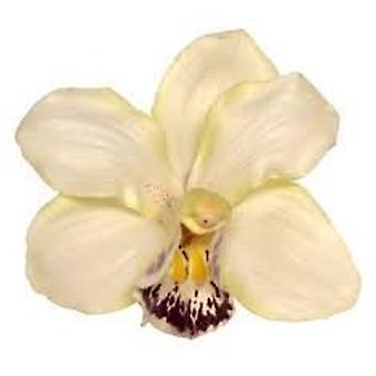 Boolavard® TM Orchid Flower Hair Clip Bridal Hawaii Party Girl (Cream)