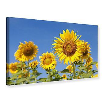Leinwand drucken himmlische Sonnenblume