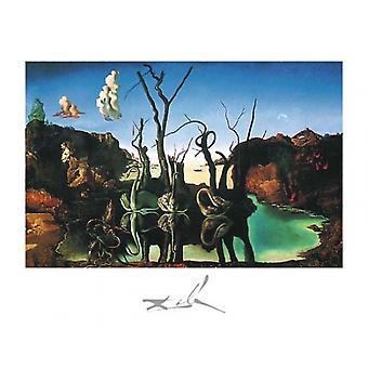 Schwäne reflektieren Elefanten c1937 Poster Print von Salvador Dali (20 x 16)