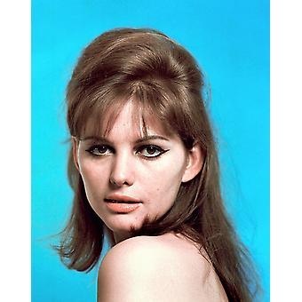 Claudia Cardinale jaren 1960 foto afdrukken