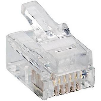 Lumberg P 128 enchufe Modular 6p6c Plug RJ12, recto transparente