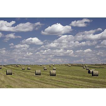 Hay Bales In Field Alberta Canada PosterPrint