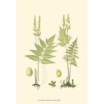 Spring Ferns I Poster Print by J Howard Miller (13 x 19)