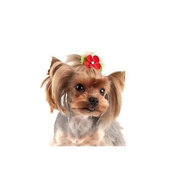 Show Tech Daisy Bows With Clip Assorted Colours 6Pk