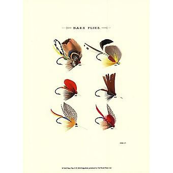 Bass Flies II Poster Print by Vision studio (10 x 13)