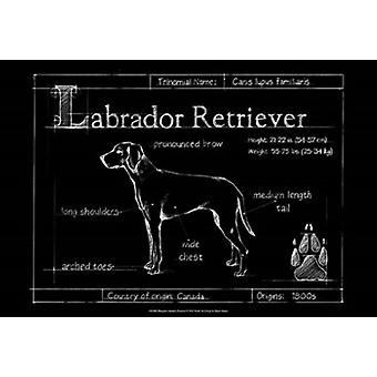 Blueprint Labrador Retriever Poster Print by Ethan Harper (19 x 13)