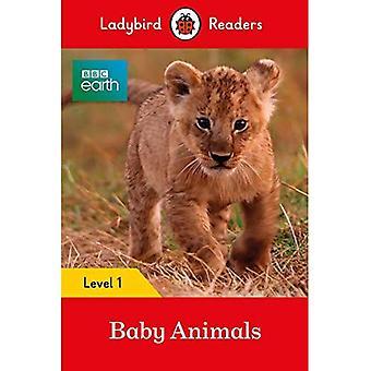 Terre de BBC: Bébé animaux - coccinelle lecteurs niveau 1