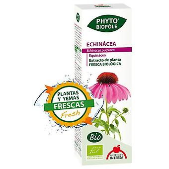 Intersa Phyto biopole echinacea (Vitamins & supplements , Special supplements)