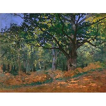 The Bodmer Oak Fontainebleau Forest Poster Print by Claude Monet
